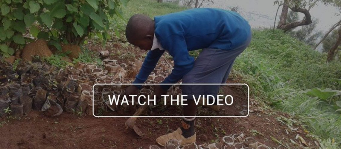 Tree-PLanting-Tanzania-Banner-Video
