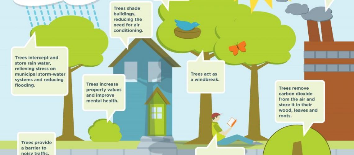 benefits of trees ForestNation