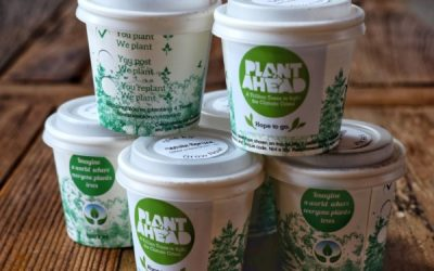 plant for the planet forestnation